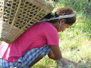 Donna nepalese a lavoro nei campi.
